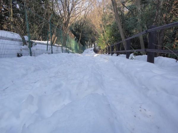 雪の狭山丘陵
