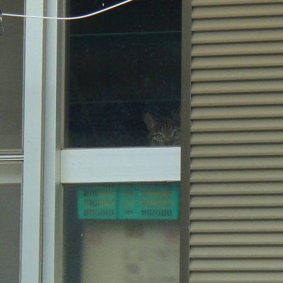 猫に監視されている