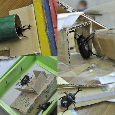 西東京 田無 絵画教室 カブトムシ