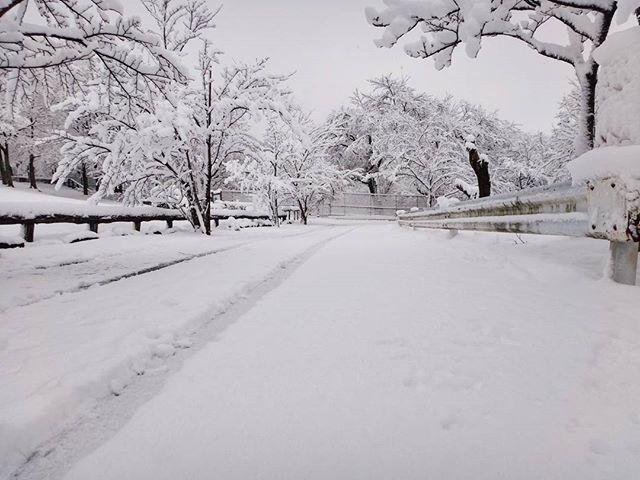 昨日の朝、一応東京都#雪景色 #瑞穂町 #六道山