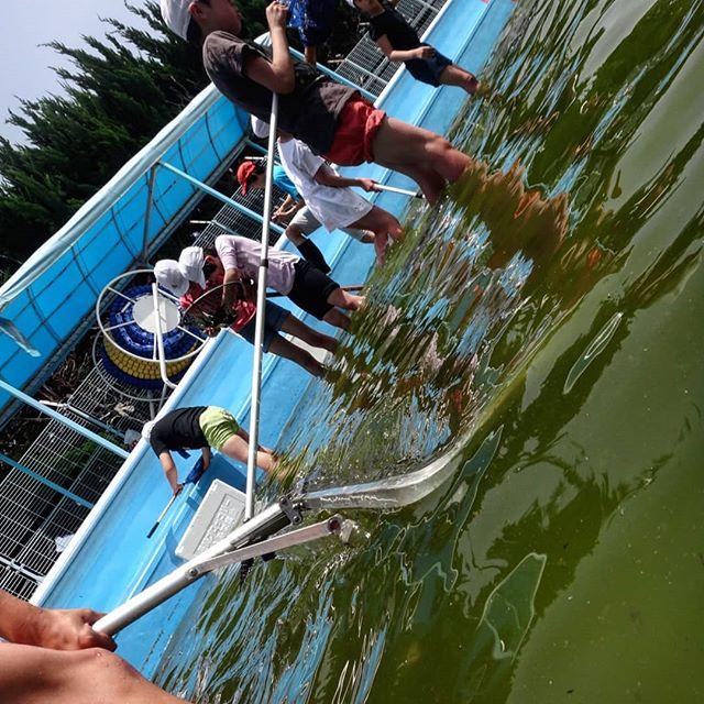 ヤゴ救出大作戦放っておけば下水行き#ヤゴ救出大作戦 #ヤゴ救出作戦 #小学校のプール #ヤゴ