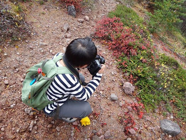 ちびっ子山岳カメラマン登場#車坂峠ハイキング #高山植物観察 #車坂峠