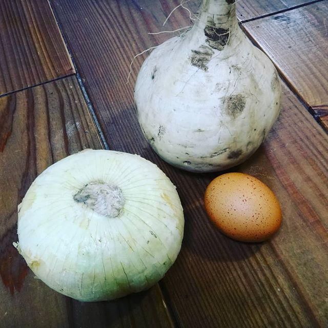 巨大なカブと巨大な玉葱。玉子は普通サイズ。__#巨大なかぶ #カブ #かぶ__