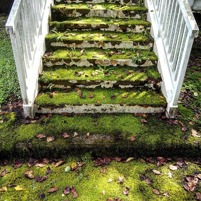 鉄の階段に苔のじゅうたん#苔の階段 #下郷 #若郷湖 #苔 #福島県