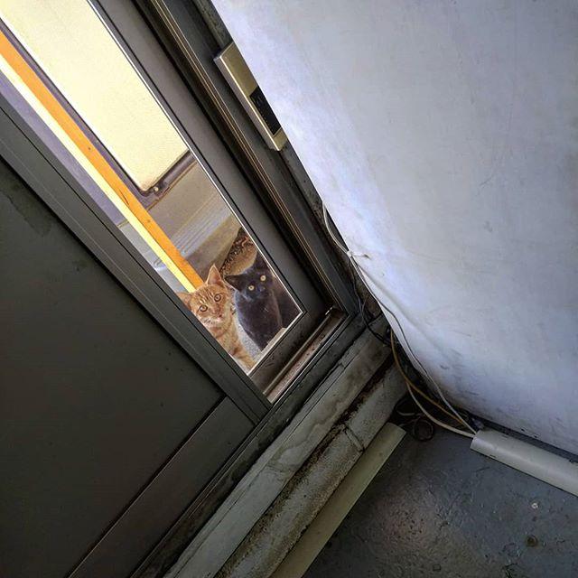 休日出勤したら来客が#猫 #休日出勤 #ネコ #ねこ #ねこすたぐらむ #ネコスタグラム