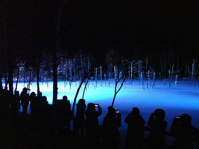 白い池、じゃなかった青い池ライトアップ。さぁ急いで空港行かなきゃ間に合わない。#青い池ライトアップ #青い池 #美瑛 #出張ついでに #出張