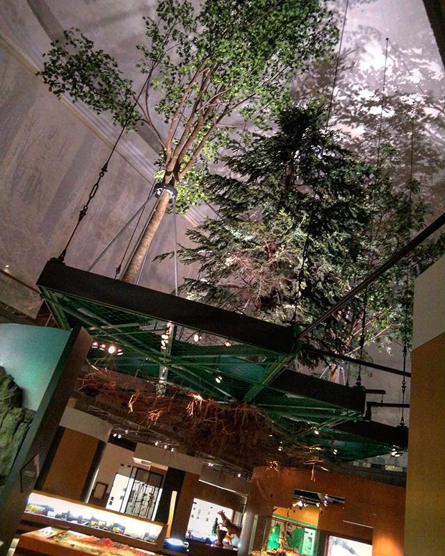 帰りの飛行機は夜なので今日は一日観光します~__#旭川市博物館 #博物館 #旭川市 #旭川 #出張中