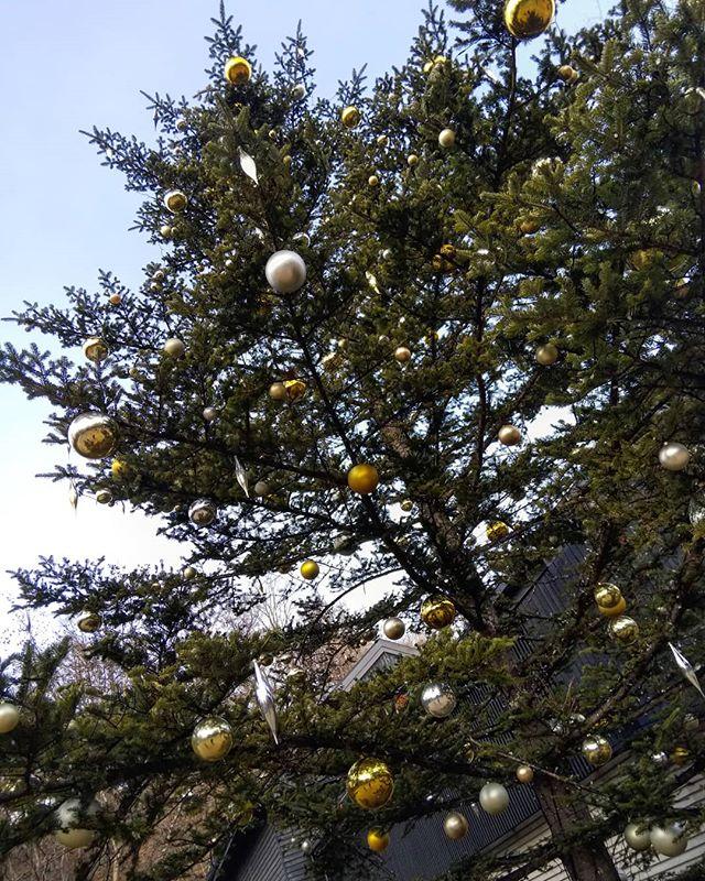 #軽井沢 #星野エリア #クリスマスツリー
