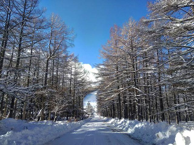 #湯の丸高原 #湯の丸スキー場 #地蔵峠 #スノードライブ #雪景色 #雪道ドライブ #ly3p #mazdampv